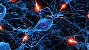 Beyin hücreleri yenilenebilir mi?