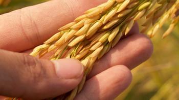 Osmanlı'dan Cumhuriyet'e tarım politikaları