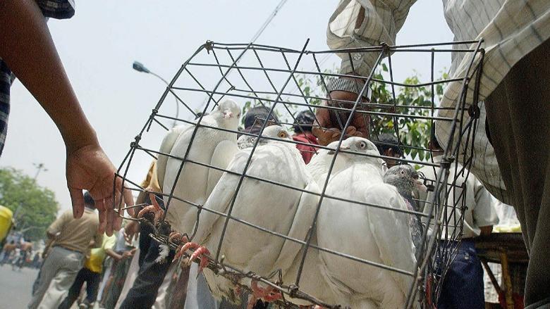 Hindistan-Pakistan sınırında casus güvercin vakası